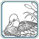 Ducks, Geese & Waterfowl