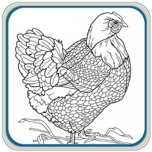 Hens Roosters & Chickens Patterns – Classic Carving Patterns
