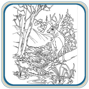 Stock Illustration Doodle Sketch Wise Owl Vector Black White Looking Over Its Shoulder To Side Wildlife Tattoo Another Design Image46358825 moreover 63 moreover Mule Deer And White Tail Deer Pattern Package as well 99 together with Pdf Diy Free Wood Burning Patterns For Beginners Download Dremel Tool For Wood Carving. on animal wood burning plans