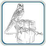 Birds, Hawks & Eagles